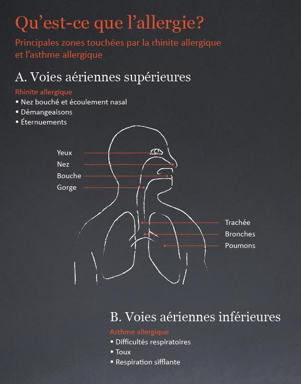 L 39 asthme allergique alk en suisse - Symptome champignon maison ...